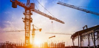 New Zealand crane numbers still at record levels